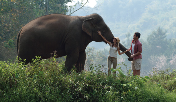 Four Seasons Tented Camp Golden Triangle: Elephant Encounter