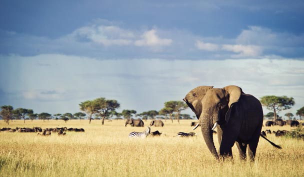 Singita Serengeti House: Wildlife - Elephants and Zebras