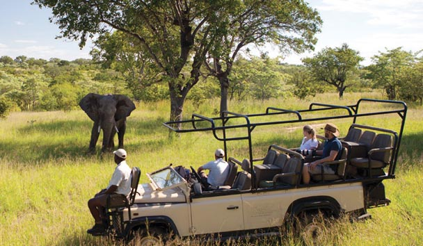 Ulusaba Private Game Reserve: Game Drive