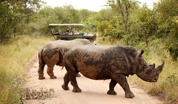 Camp Jabulani: Rhino Encounter