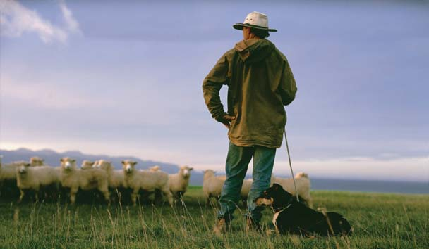 Wharekauhau Country Estate: Sheep Farming