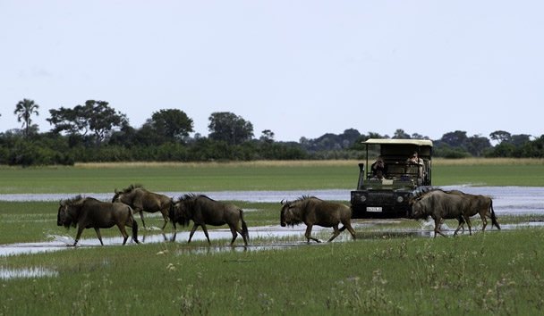 Jao Camp: Safari