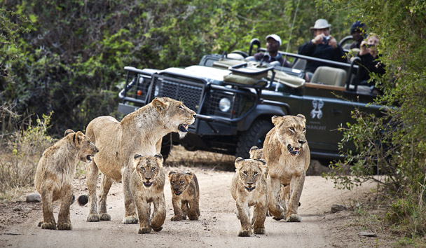 Londolozi Private Game Reserve: Photographic Safari