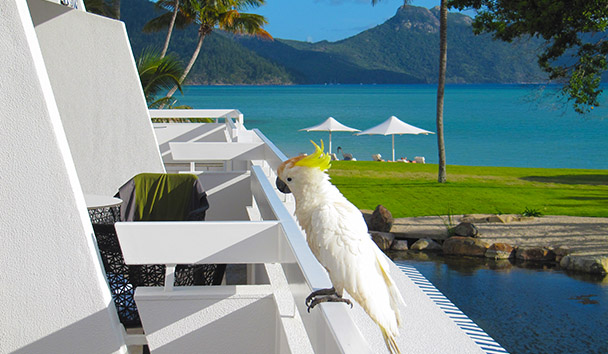 An inquisitive Cockatoo at One&Only Hayman Island