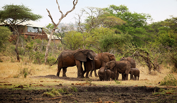 Singita Faru Faru Lodge: Elephants outside the lodge