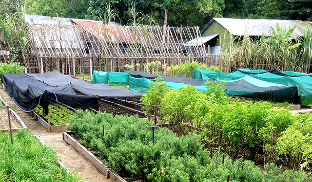 Julie's image of the Soneva Fushi Herb Garden