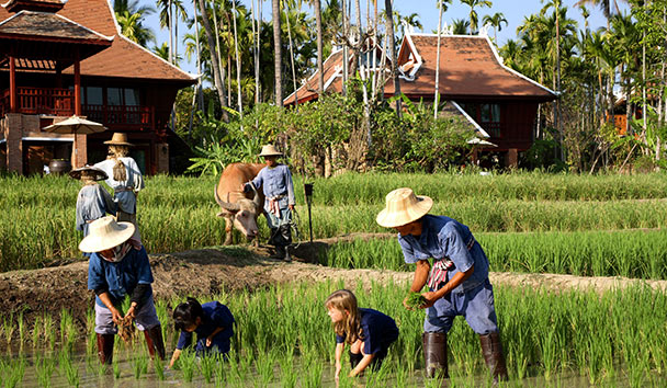 The Dhara Dhevi: Rice Field