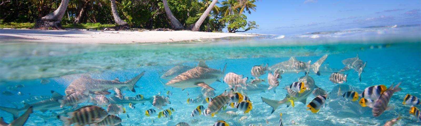 Luxury Maldives Holidays Amp Luxury Maldives Resorts Elegant