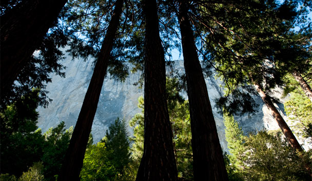 California's National Parks Celebrate 100 Years: Sequoia National Park