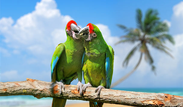 Romance in the Caribbean: A luxury love-nest for love birds