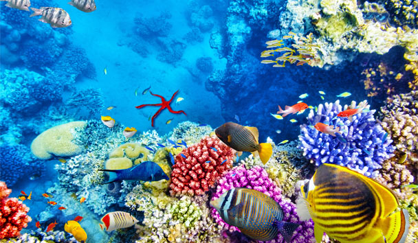 Vibrant Voyages: The Great Barrier Reef