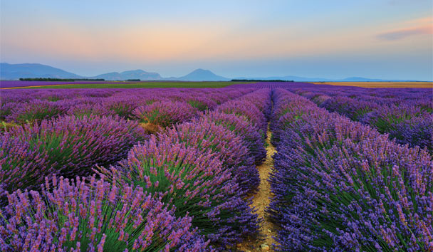 From fragrant lavender fields to to staggering mounatin ranges, Europe is full of natural beauty