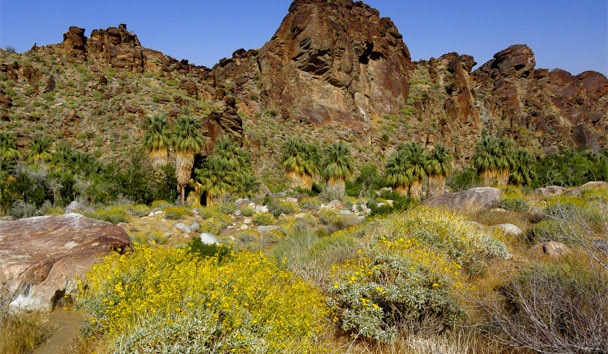 Getting to know The Golden State: Indian Canyons at Palm Springs