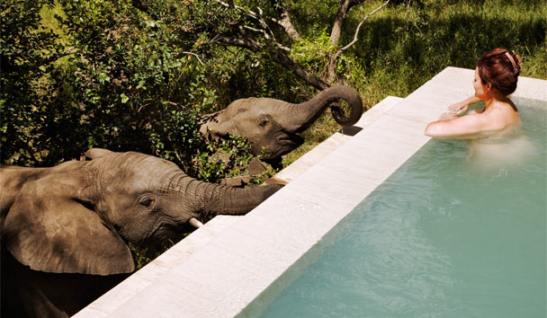 Royal Malewane: Elephants at pool