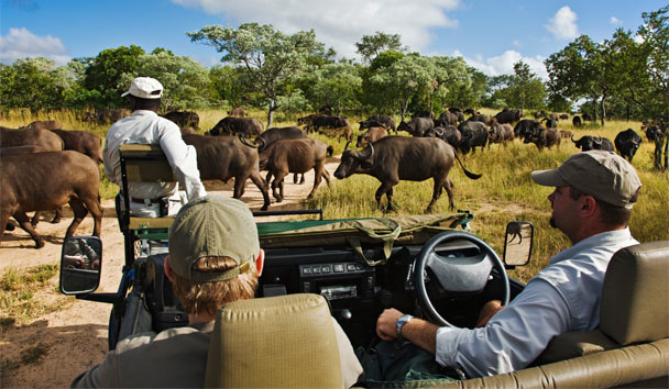 Royal Malewane: Game drive