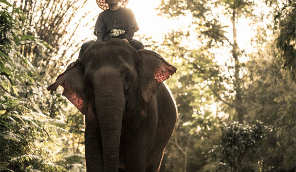 Four Seasons Tented Camp Golden Triangle: Mahout Training