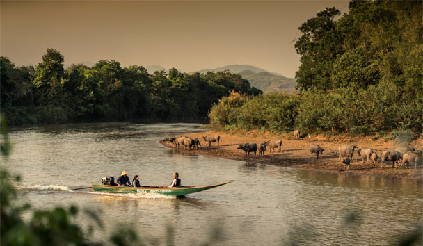 Four Seasons Tented Camp Golden Triangle: Wildlife Sightings