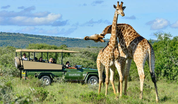 Shamwari Private Game Reserve: Safari Drive