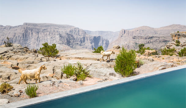 Anantara Al Jabal Al Akhdar Resort: Cliff Pool Villa View