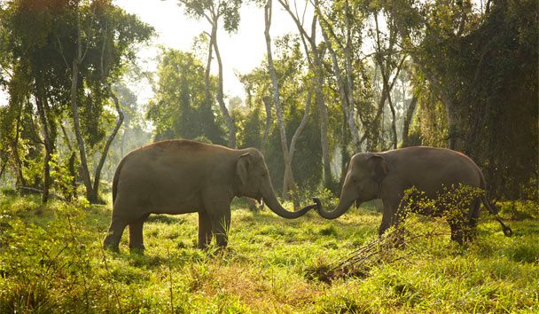 Elephants in their natural habitat at Anantara Golden Triangle Elephant Camp and Resort