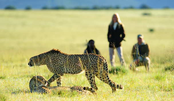 Shamwari Private Game Reserve, Luxury Safari