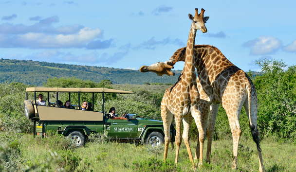 Shamwari Private Game Reserve, Big Five Game Viewing Safaris