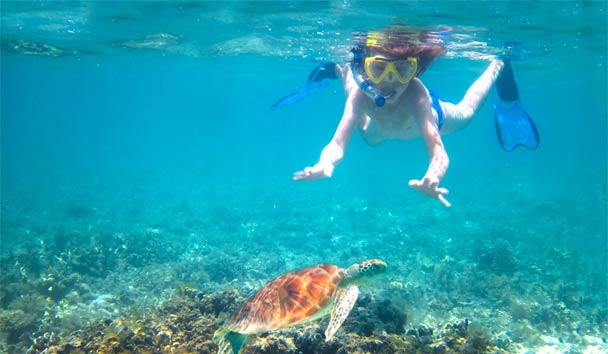 Organise an exclusive 'swimming with the turtles' experience