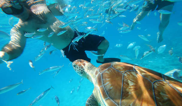 Snorkelling with Turtles, Barbados
