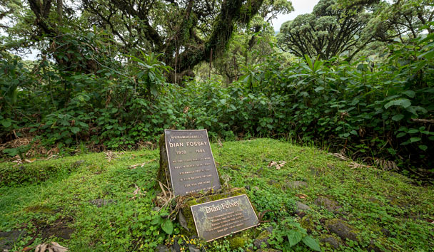Bisate Lodge, Dian Fossey's Grave