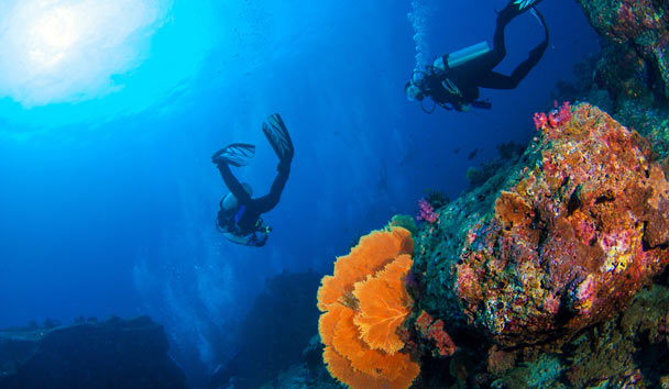 Coral and Scuba-Diving, Red Sea