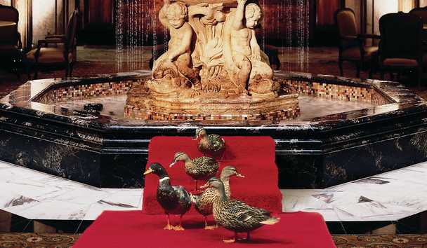 The Peabody: Peabody Ducks