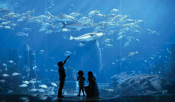 The Lost Chambers Aquarium at Atlantis, The Palm