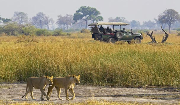 Selinda Camp, Safari Activities
