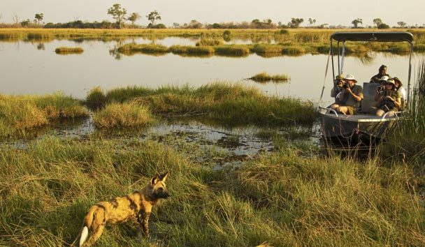 Selinda Camp, Safari Experience