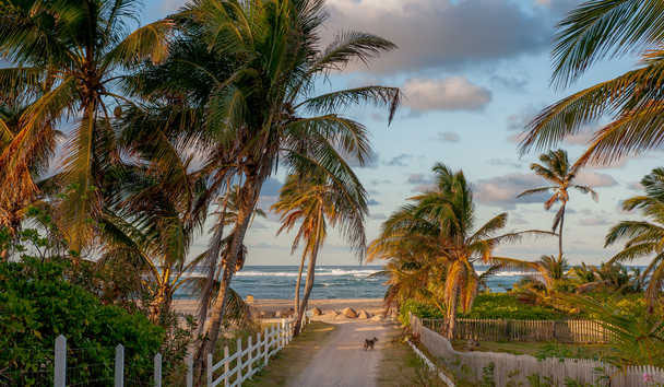 Nisbet Plantation Beach Club: Beach path