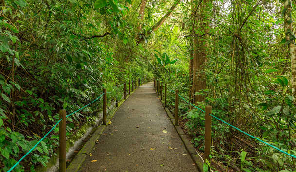 Finca Rosa Blanca Coffee Plantation Resort: Nature walk
