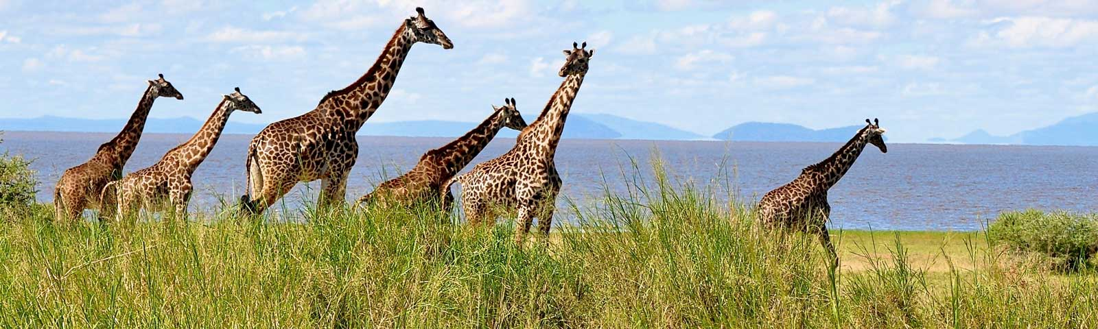 The Treasures of Tanzania: Safari & Zanzibar
