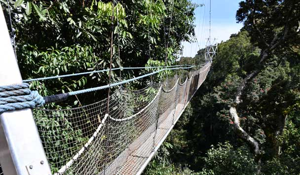 The Canopy Walk in Nyungwe National Park