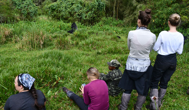 Our trekking group watching the glorious gorillas