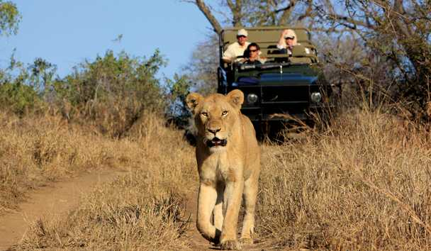 MalaMala Rattray's Camp: Game Drives