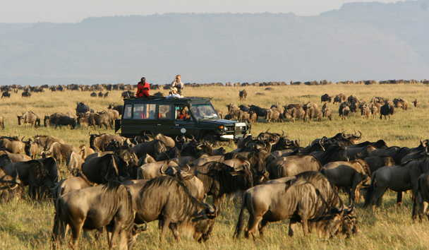 Rekero Camp: Game Drive During Great Wildebeest Migration