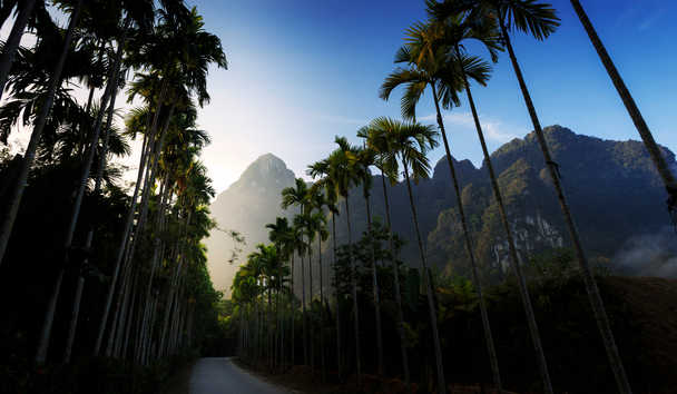 Elephant Hills: Khao Sok National Park