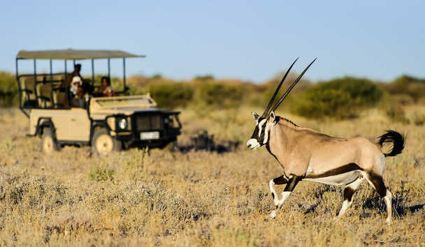 Kalahari Plains Camp: Wildlife