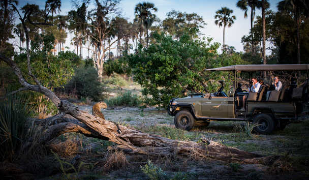 Little Mombo Camp: Game Drive